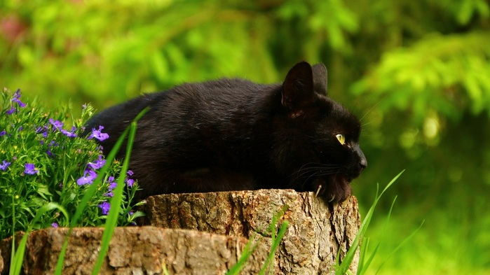 Black-cat-rest-stump-flowers_2560x1440 (700x393, 96Kb)