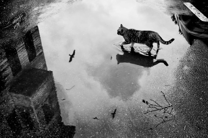 wsi-imageoptim-mysterious-cat-photography-black-and-white-51-57c0399baf8ba__880 (700x466, 108Kb)