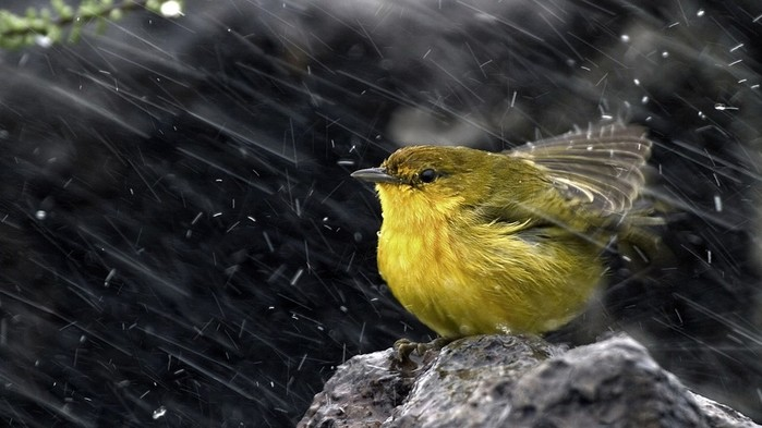 Ice_snow_rain_birds_animals_stones-_ehx (700x393, 71Kb)