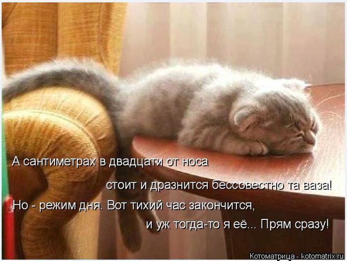 kotomatritsa_k (700x527, 345Kb)