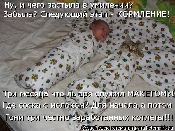 kotomatritsa_t (600x450, 219Kb)