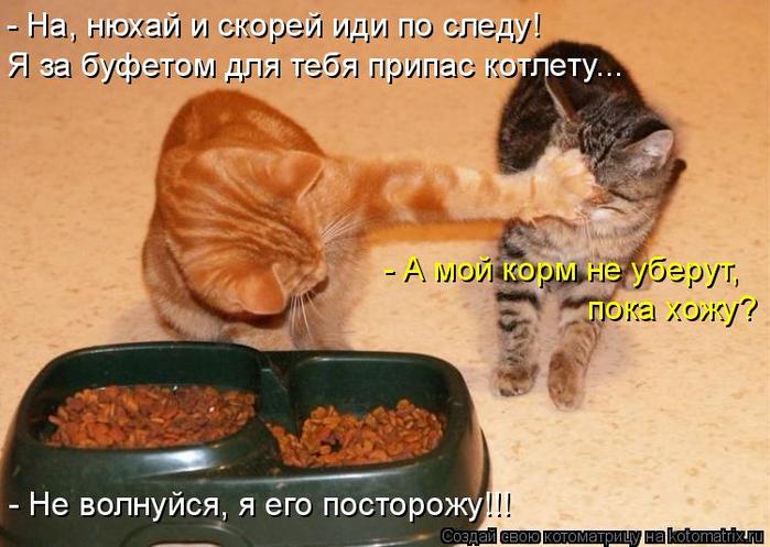 kotomatritsa_Y (700x497, 364Kb)