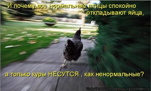4743317_26 (500x301, 32Kb)
