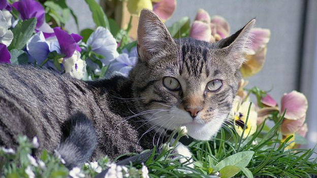 3085196_151015074631_cat_flower_bed_640x360_gtinnetjeccby2_0_nocredit (624x351, 54Kb)