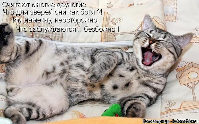 kotomatritsa_1 (700x436, 312Kb)