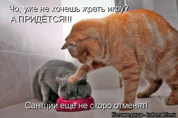 kotomatritsa_k (568x379, 111Kb)
