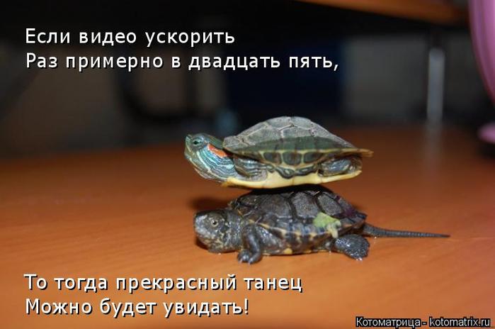 kotomatritsa_p (1) (700x464, 234Kb)