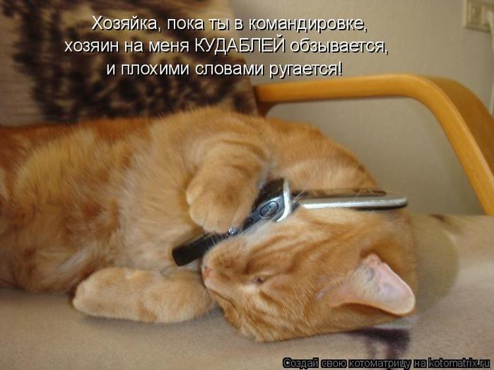 kotomatritsa_q (700x524, 320Kb)