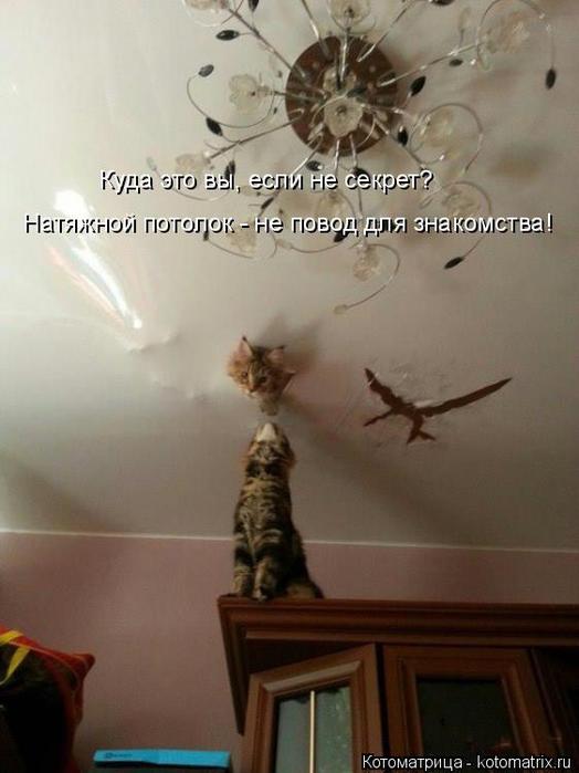 kotomatritsa_T (524x700, 255Kb)
