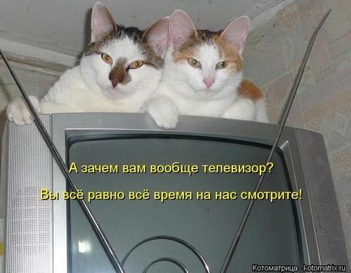 4743317_142525022_kotomatritsa_6O (500x389, 31Kb)