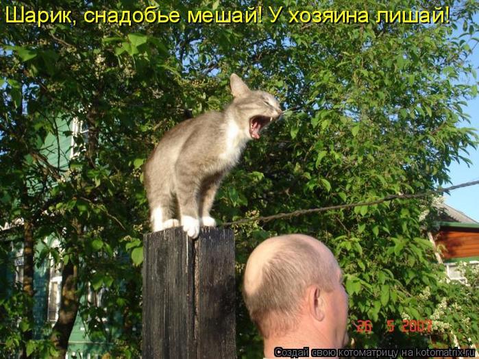 kotomatritsa_9_ (700x524, 518Kb)