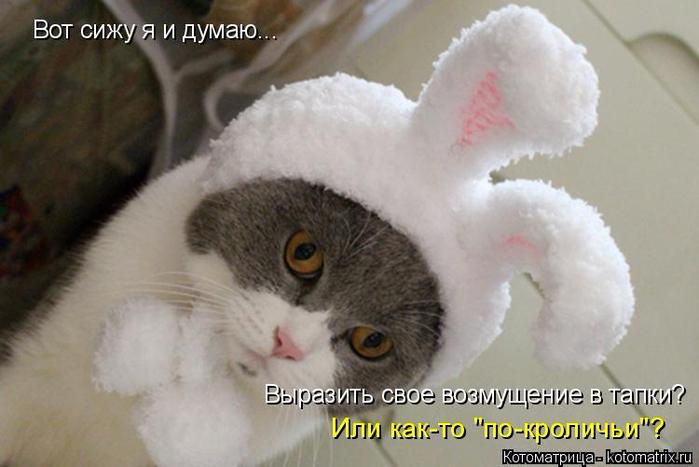 kotomatritsa_cu (700x467, 250Kb)