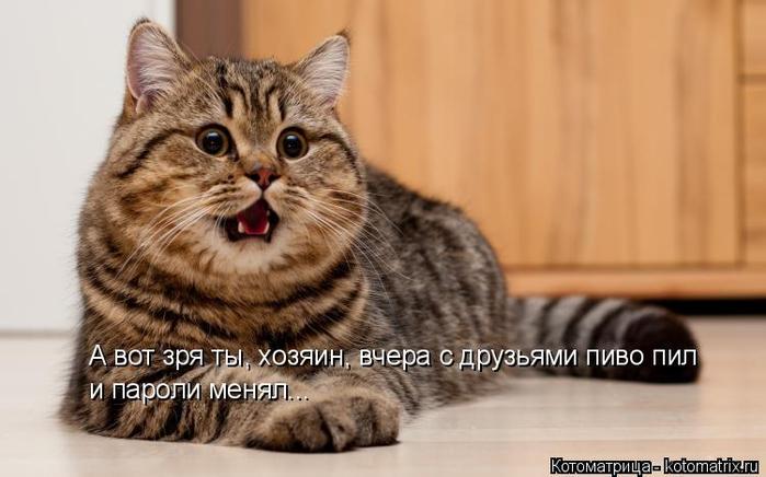 kotomatritsa_OD (700x436, 236Kb)