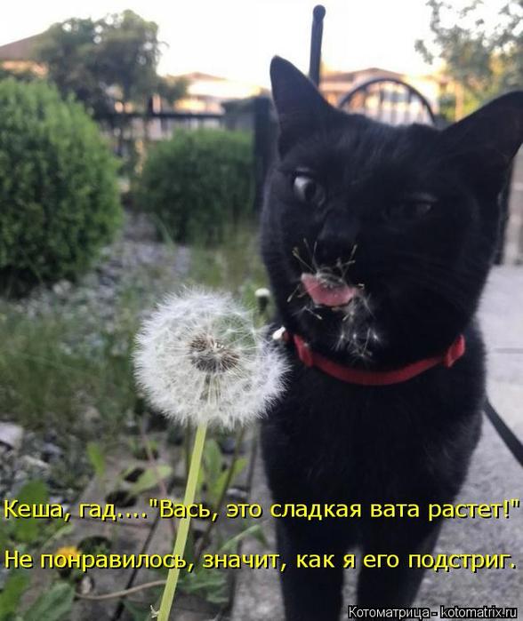 kotomatritsa_Ri (588x700, 328Kb)