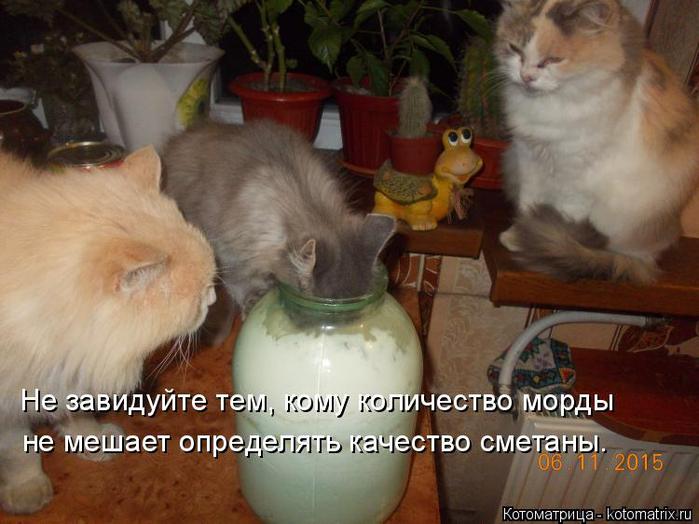 kotomatritsa_x9 (700x524, 346Kb)