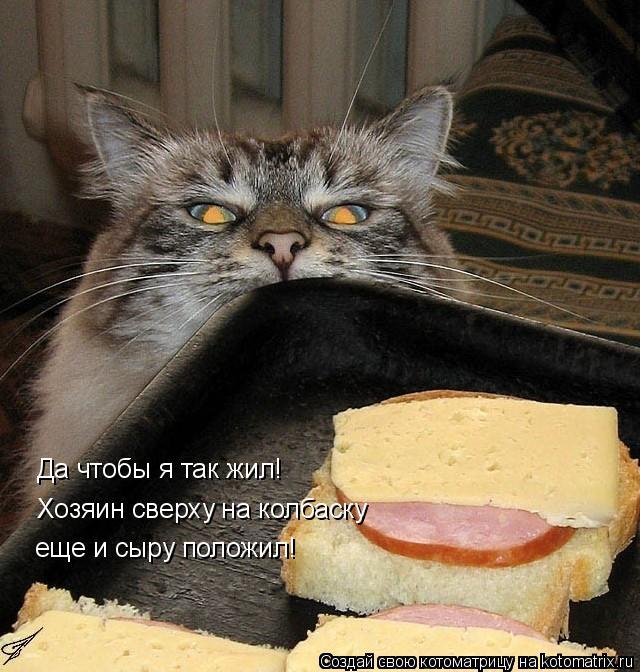 kotomatritsa_Z (640x672, 281Kb)