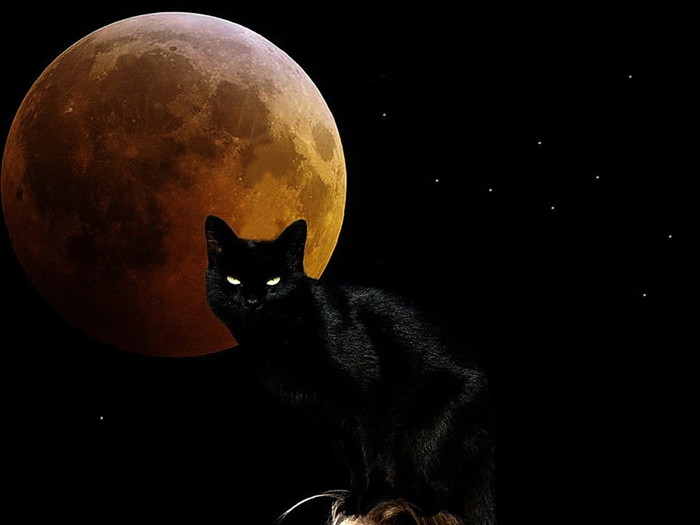 Witchy-Moon-Cat-1024x768 (700x525, 39Kb)