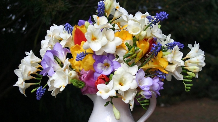 freesia_muscari_flowers_pot_beautifully_42165_1366x768 (700x393, 127Kb)