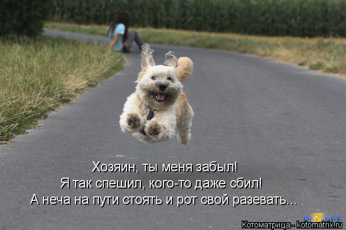 kotomatritsa_A (700x466, 185Kb)