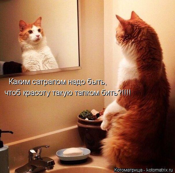kotomatritsa_e (607x600, 251Kb)
