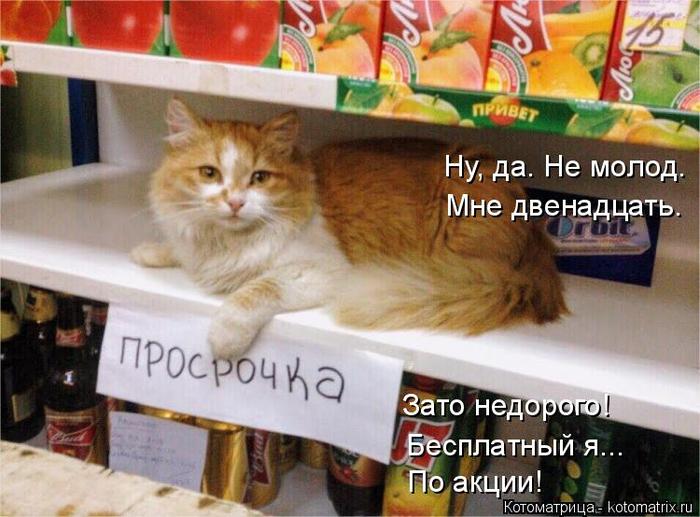 kotomatritsa_o8 (700x517, 382Kb)