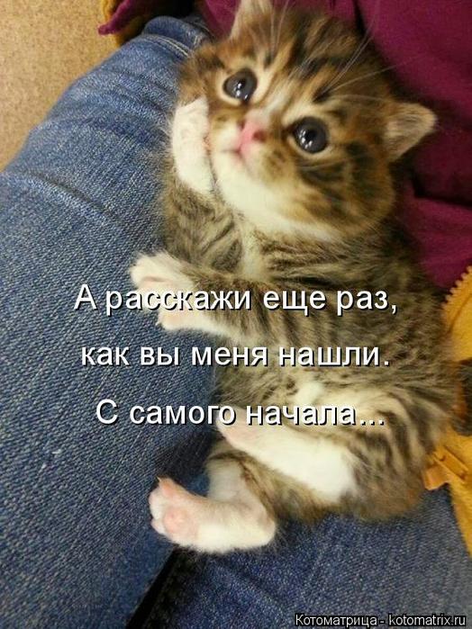 kotomatritsa_v (524x700, 411Kb)