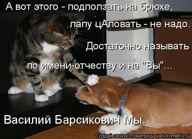 kotomatritsa_3F (640x465, 188Kb)