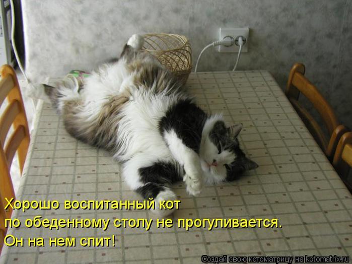 kotomatritsa_E (700x524, 324Kb)