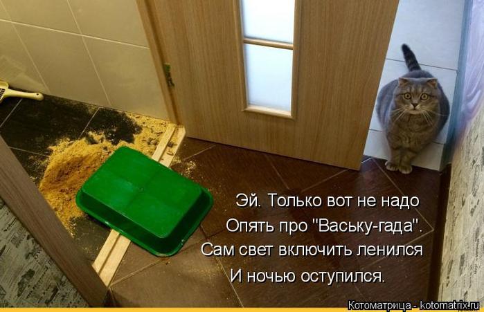 kotomatritsa_X (700x451, 303Kb)