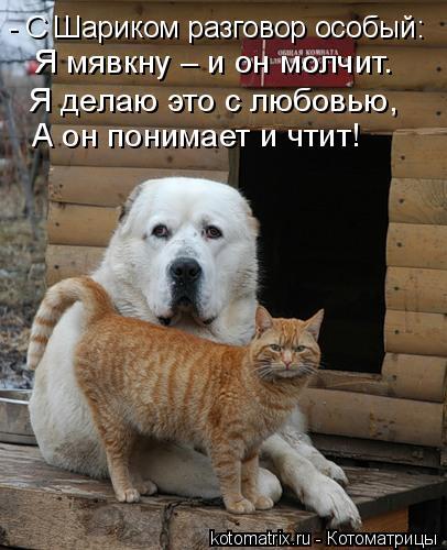 kotomatritsa_1i (406x500, 161Kb)