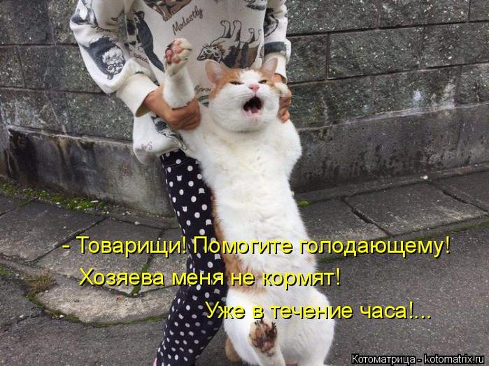 kotomatritsa_A8 (700x524, 407Kb)