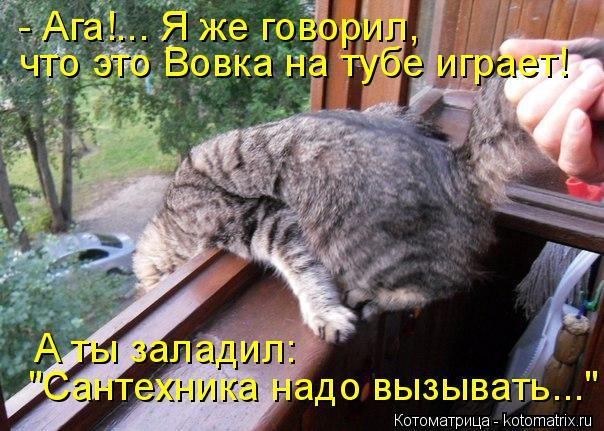 kotomatritsa_jO (604x431, 268Kb)