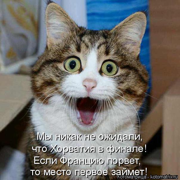 kotomatritsa_KT (604x604, 245Kb)
