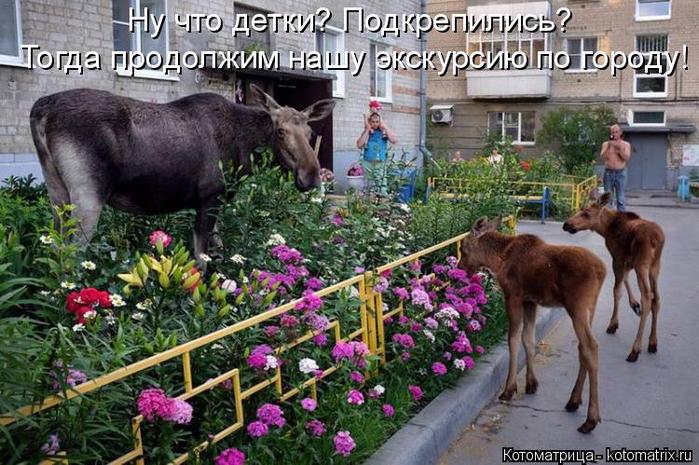 kotomatritsa_O (1) (700x465, 408Kb)