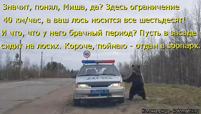 kotomatritsa_O6 (700x397, 310Kb)