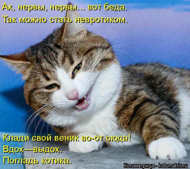 kotomatritsa_q (1) (604x538, 275Kb)