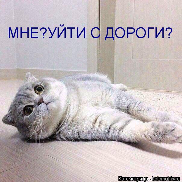 kotomatritsa_qF (604x604, 239Kb)