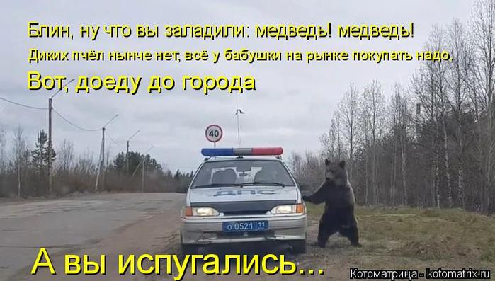 kotomatritsa_U5 (700x397, 280Kb)