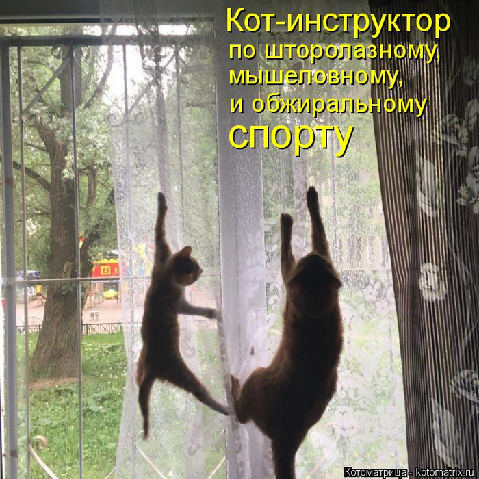 kotomatritsa_vj (700x700, 556Kb)