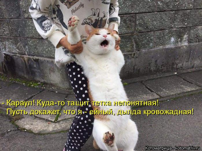 kotomatritsa_W (700x524, 400Kb)