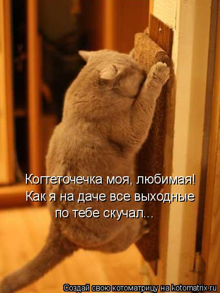 kotomatritsa_y (450x600, 173Kb)