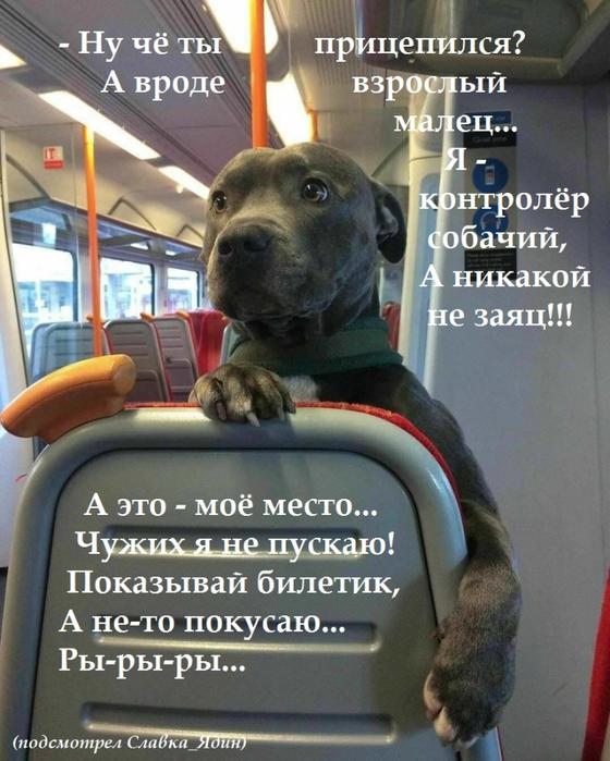 билет-какой билет-проездной (560x700, 407Kb)