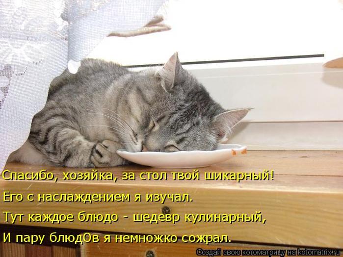 kotomatritsa_5 (700x524, 354Kb)
