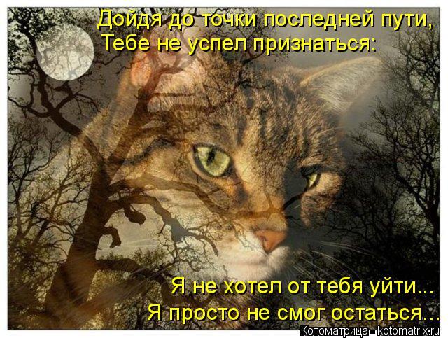 kotomatritsa_60 (640x483, 321Kb)