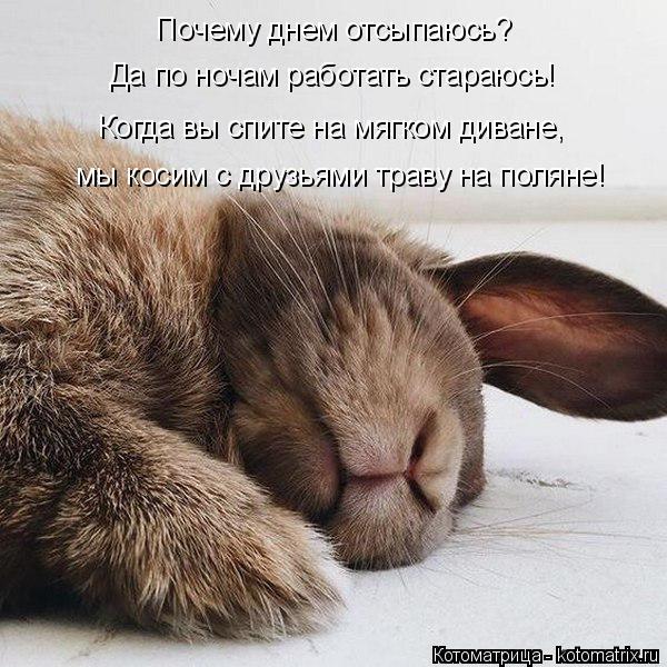 kotomatritsa_j (1) (600x600, 254Kb)
