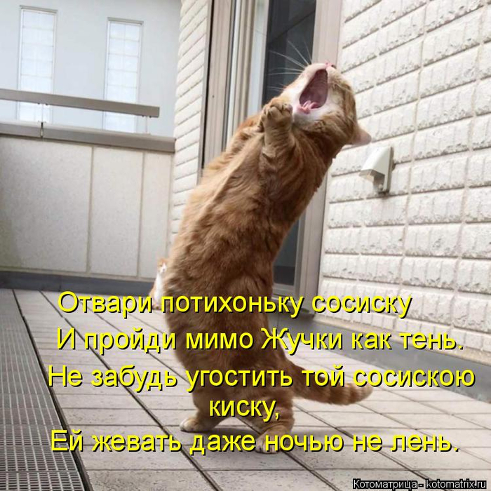 kotomatritsa_q (1) (700x700, 489Kb)
