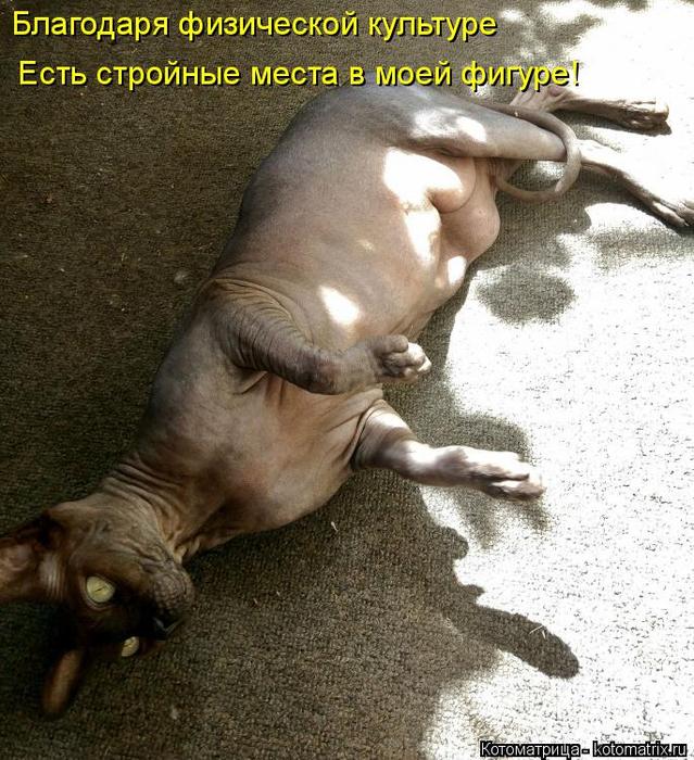 kotomatritsa_Y (639x700, 461Kb)