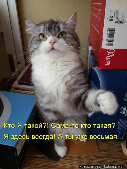 kotomatritsa_4 (524x700, 326Kb)