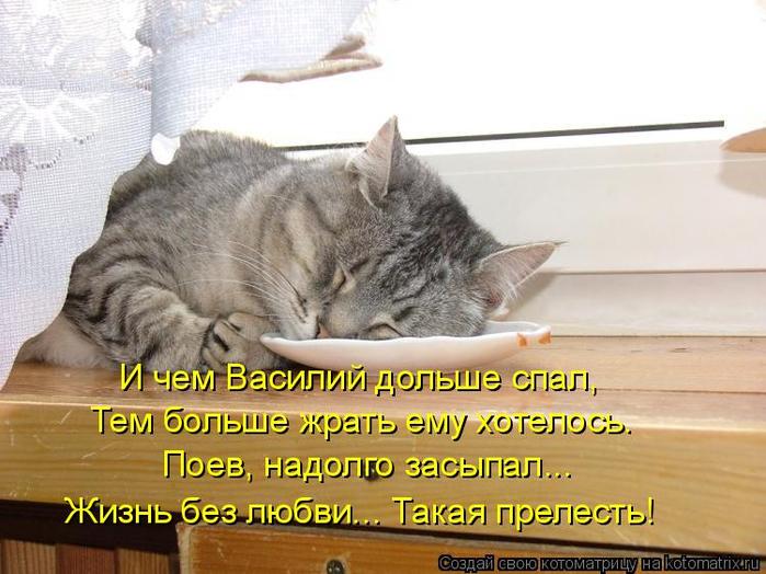 kotomatritsa_v (700x524, 352Kb)