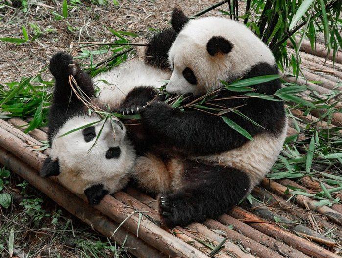 guide-pandas-14-768x580 (700x528, 117Kb)